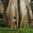 Sam na Selva (Sam in the Wood)